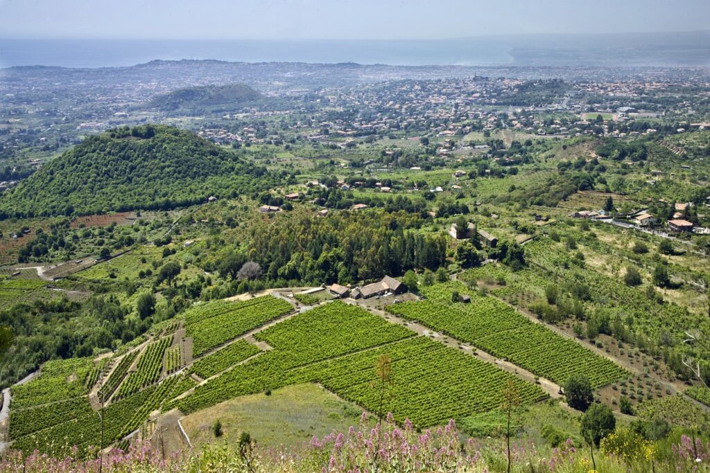 A_panoramic_view_of_Etna-vineyards-min